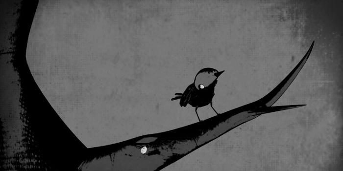 Jakob writes - Songbird, your singing tree is gone - A poem by Jakob Straub
